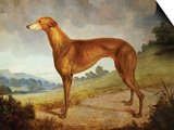 A Tan Greyhound Bitch in an Extensive River Landscape Posters by F. H. Roscoe