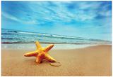 Starfish On The Beach - Best For Web Use Kunstdrucke
