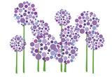 Allium violet Affiches