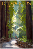 Redwoods State Park - Pathway in Trees - Reprodüksiyon