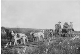 Dog Team pulling a Railroad Cart Photograph - Nome, AK Posters