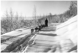 Mushing a Dog Sled in Alaska Photograph - Alaska Print