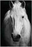 White Horse'S Black And White Art Portrait Plakaty