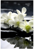 Zen Stones And Branch White Orchids With Reflection Poster