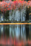 Trees in Autumn Colors Casting Reflections into a Calm Lake Stampa fotografica di Robbie George