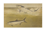 Painting of a Pair of Tarpon Fish Reproduction procédé giclée par Hashime Murayama