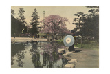 A Woman Observes the Reflection of Cherry Blossoms in a Small Pond Photographic Print by Kiyoshi Sakamoto