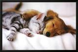 Cuddles (Sleeping Puppy and Kitten) Art Poster Print Posters