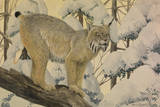 A Painting of a Canada Lynx Standing on Fallen Tree Trunk Giclée-tryk af Louis Agassi Fuertes