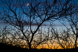 A Partial Moon Seen Through the Branches of Mesquite Tree at Sunset Photographic Print by Greg Winston