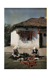 Bulgarian Women String Peppers to Dry for Winter Storage Fotografiskt tryck av Wilhelm Tobien