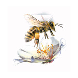 A Painting of a Honeybee's Beating Wings Giclee Print by Bruce Morser