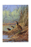 The Brown Feathers of Bitterns Blend with the Variegated Surrounding Impression giclée par Allan Brooks