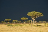 A Dark Stormy Sky over a Landscape with Acacia Trees Photographic Print by Bob Smith