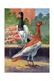 A View of Two Magpie Pigeons Giclee Print by Hashime Murayama