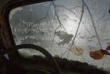 Silhouette of a Blue Tit (Cyanistes / Parus Caeruleus) Seen Through an Old Car Windscreen, Sweden Photographie par Pal Hermansen