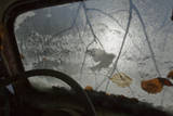 Silhouette of a Blue Tit (Cyanistes / Parus Caeruleus) Seen Through an Old Car Windscreen, Sweden Photographic Print by Pal Hermansen
