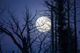 A Full Moon Rise Seen Through Silhouetted Trees Photographic Print by Robbie George