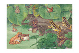 A Variety of Frogs Found in the Northern United States Giclee Print by Hashime Murayama