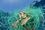 Loggerhead Turtle (Caretta Caretta) Trapped in a Drifting Abandoned Net, Mediterranean Sea Photographic Print by Jordi Chias