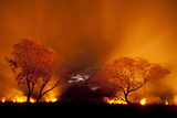Grass Fire at Night in Pantanal, Brazil Photographic Print by Bence Mate