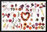Garden Flowers Educational Science Chart Poster Posters