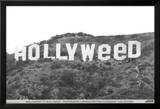 Hollyweed Foto