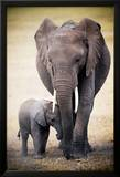 Elephant and Baby Kunstdrucke