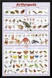 Arthropods Insects Educational Science Chart Poster Poster
