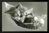 Gatitos en hamaca Lámina por Keith Kimberlin