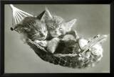 Kittens In A Hammock Prints by Keith Kimberlin