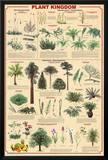 Plant Kingdom 2 Educational Science Chart Poster Prints