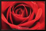 Red Rose (Passion) Art Poster Print Posters