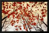 Bare Branches and Red Maple Leaves Prints