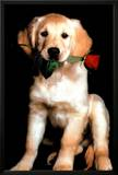Golden Retriever with Red Rose Art Print Poster Poster