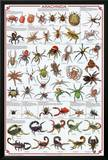 Arachnida Spider Educational Science Chart Poster Posters