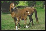 Horses (Mare and Foal) Art Poster Print Print
