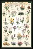 North American Wildflowers Educational Science Chart Poster Posters