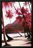 Red Palm Trees-Along Beach Kunstdrucke