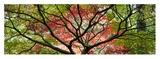 Westonbirt Arboretum Kunst von Peter Adams