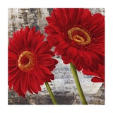 Red Gerberas I Poster by Jenny Thomlinson
