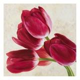 Tulip Concerto II Prints by Luca Villa