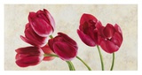 Tulip Concerto Print by Luca Villa