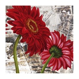 Red Gerberas III Posters by Jenny Thomlinson