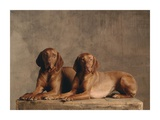 Two Short-Haired Hungarian Vizsla Pointers (detail) Posters by Yann Arthus-Bertrand