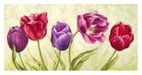 Tulipani Danzanti Poster by Silvia Mei
