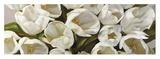 Tulipani Bianchi Art by Leonardo Sanna