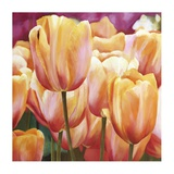 Spring Tulips I Prints by Luca Villa