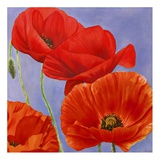 Dance of Poppies I Poster by Luca Villa