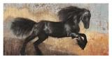 Black Stallion Prints by Dario Moschetta